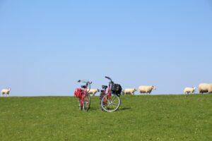Fahrräder auf dem Deich. © TMS Büsum GmbH - Diamantrad-Blog